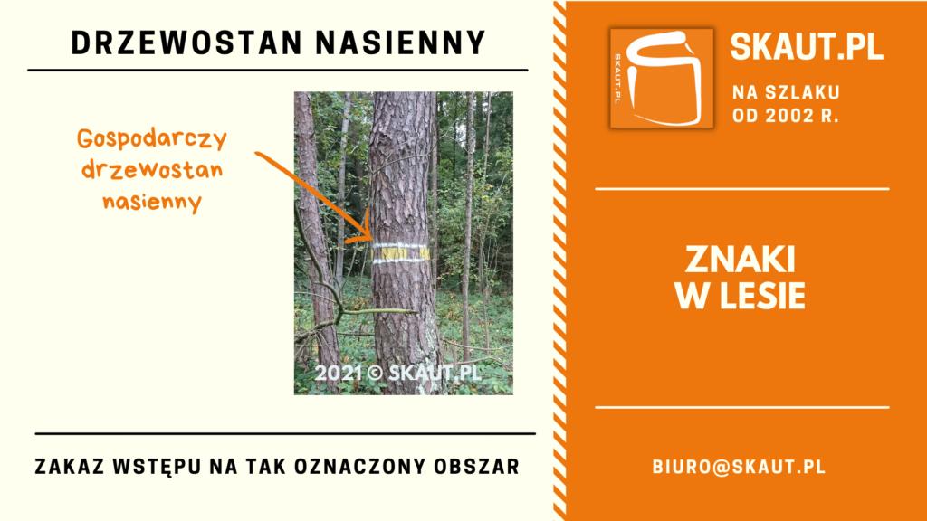 Znak namalowany na drzewie - drzewostan nasienny gospodarczy