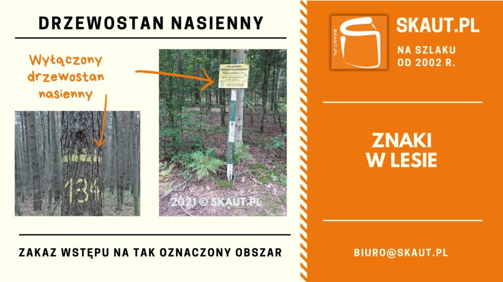 Znaki namalowany na drzewie - drzewostan nasienny wyłączony