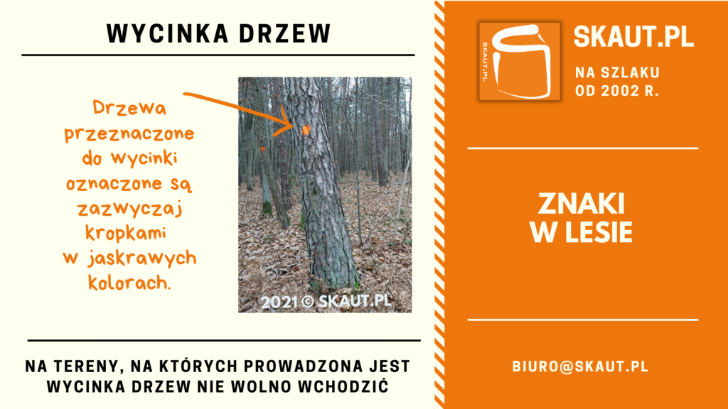 Znaki namalowane na drzewach w lesie - drzewa do wycinki