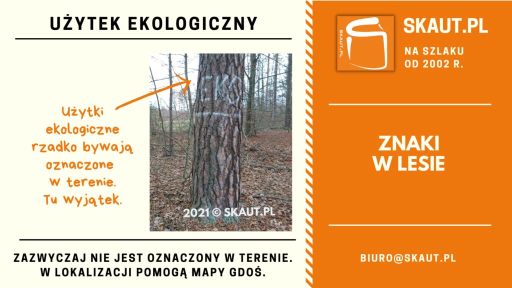 Znaki malowane na drzewach w lesie - użytek ekologiczny